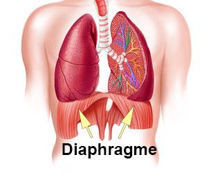 Comment pratiquer la respiration abdominale : le diaphragme