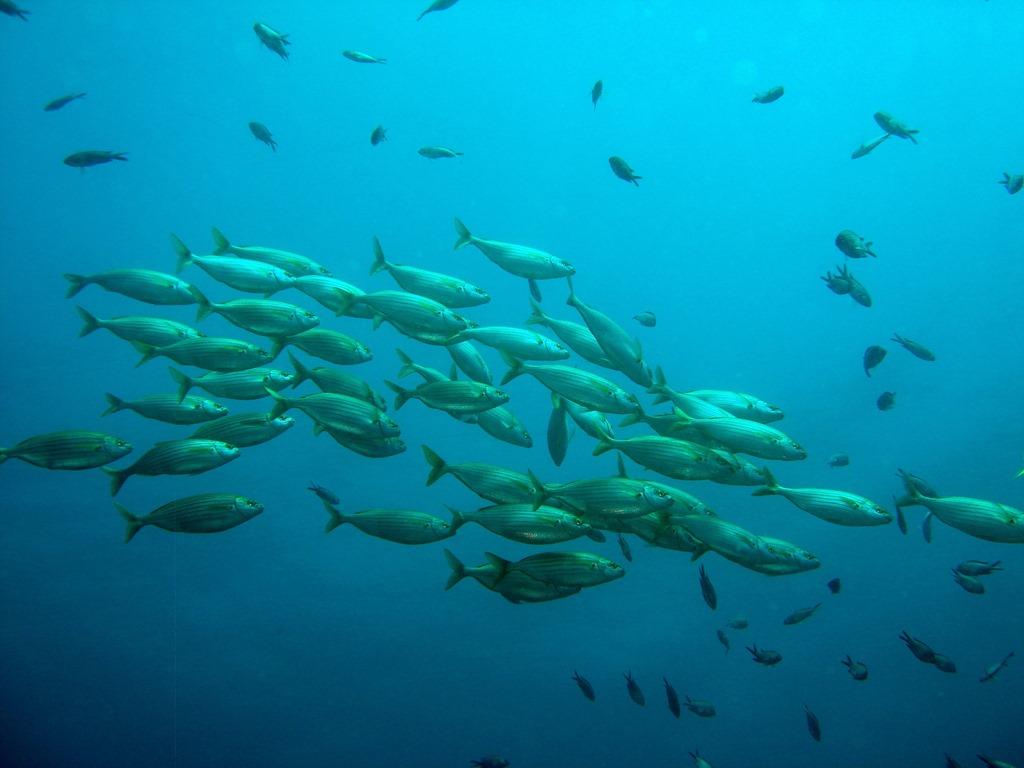 Comme un poisson dans l 39 eau for School of fish